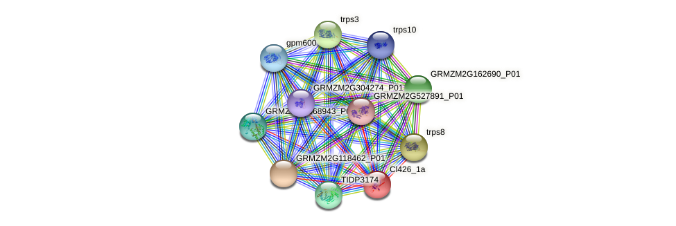 cl426_1a protein (Zea mays) - STRING interaction network