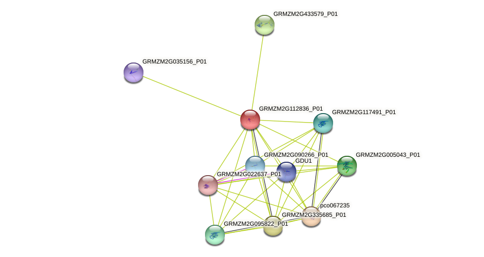 GRMZM2G112836_P01 protein (Zea mays) - STRING interaction network