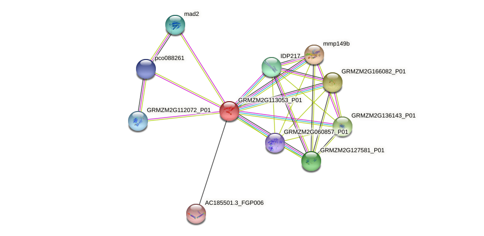 Zm.9628 protein (Zea mays) - STRING interaction network