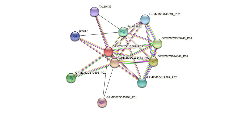 GRMZM2G113062_P03 protein (Zea mays) - STRING interaction network