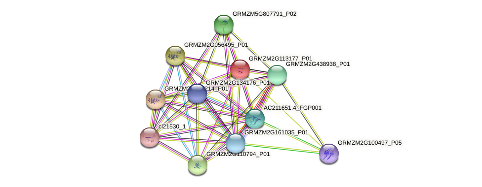 GRMZM2G113177_P01 protein (Zea mays) - STRING interaction network