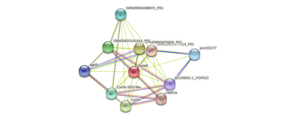GRMZM2G113229_P03 protein (Zea mays) - STRING interaction network