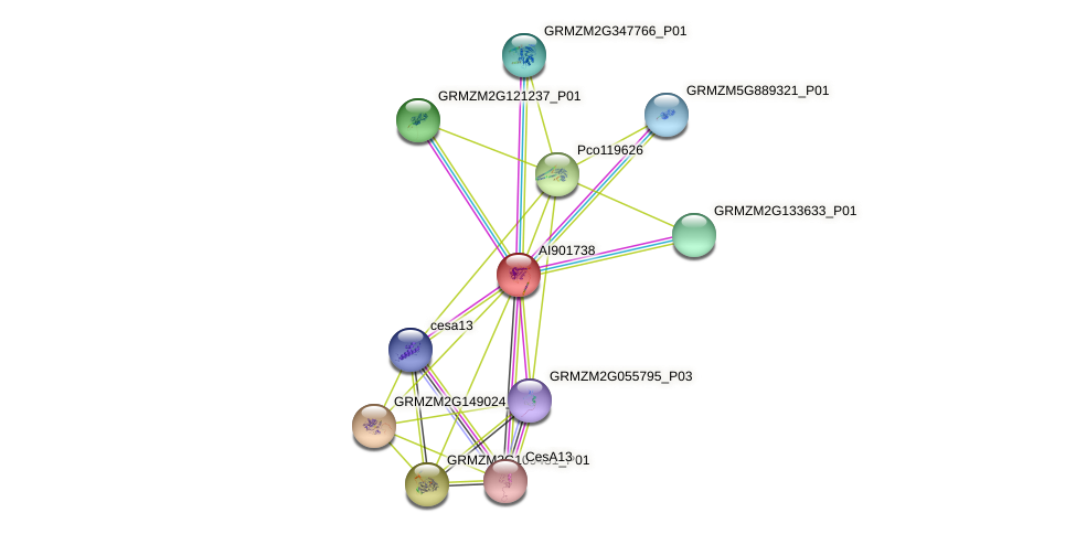 AI901738 protein (Zea mays) - STRING interaction network