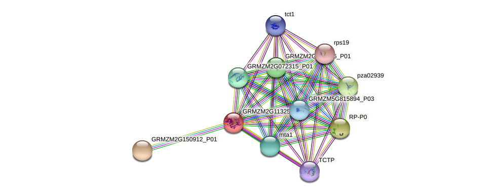 GRMZM2G113250_P01 protein (Zea mays) - STRING interaction network