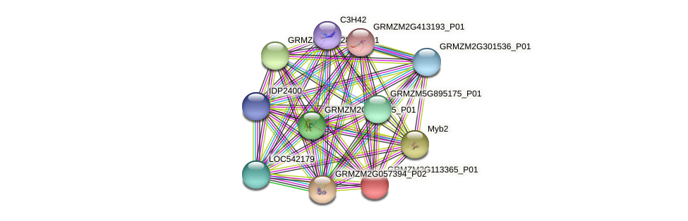 103651644 protein (Zea mays) - STRING interaction network
