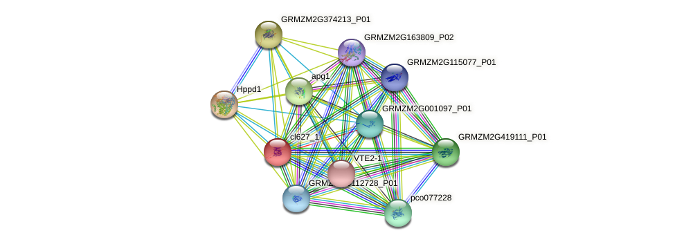 cl627_1 protein (Zea mays) - STRING interaction network