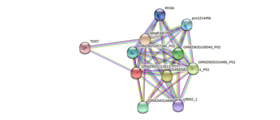 Zm.21062 protein (Zea mays) - STRING interaction network