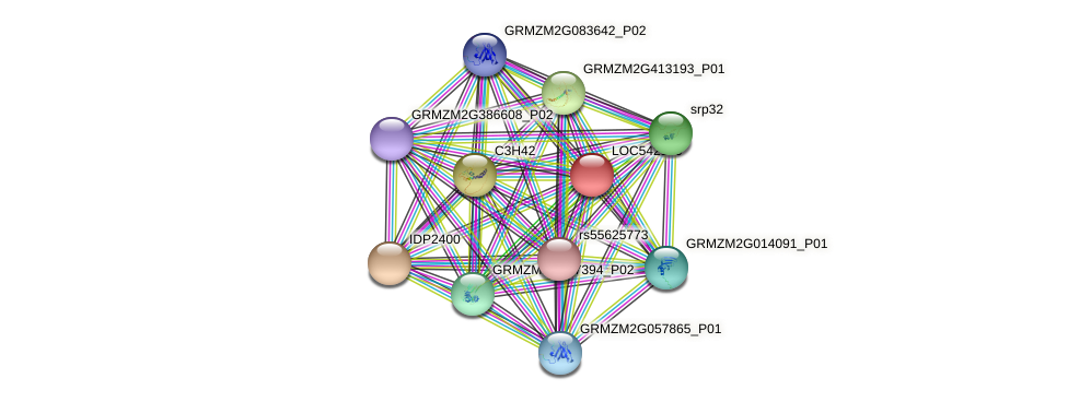 LOC542179 protein (Zea mays) - STRING interaction network