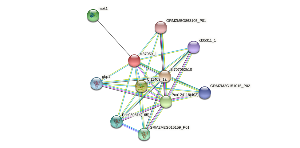 cl37059_1 protein (Zea mays) - STRING interaction network