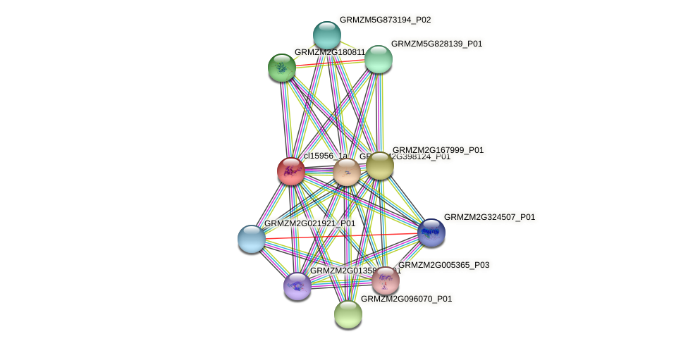 cl15956_1a protein (Zea mays) - STRING interaction network