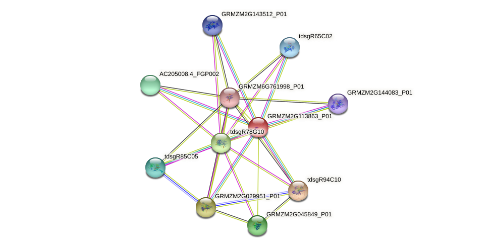 GRMZM2G113863_P01 protein (Zea mays) - STRING interaction network