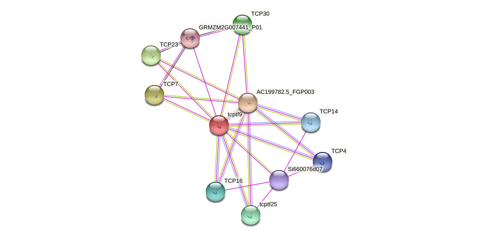 tcptf9 protein (Zea mays) - STRING interaction network