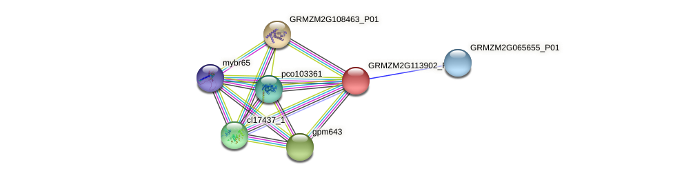GRMZM2G113902_P01 protein (Zea mays) - STRING interaction network