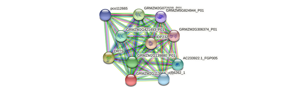 GRMZM2G113959_P01 protein (Zea mays) - STRING interaction network