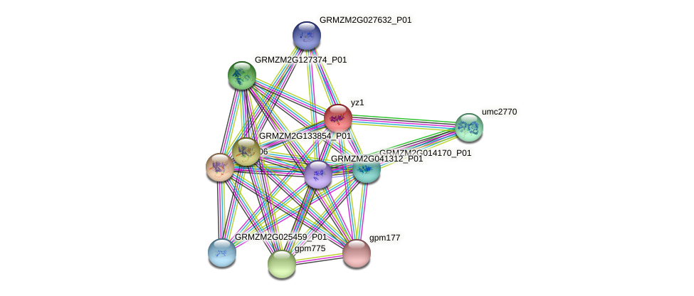 yz1 protein (Zea mays) - STRING interaction network