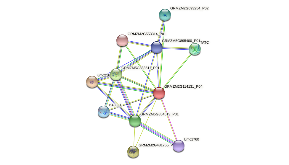 GRMZM2G114131_P01 protein (Zea mays) - STRING interaction network