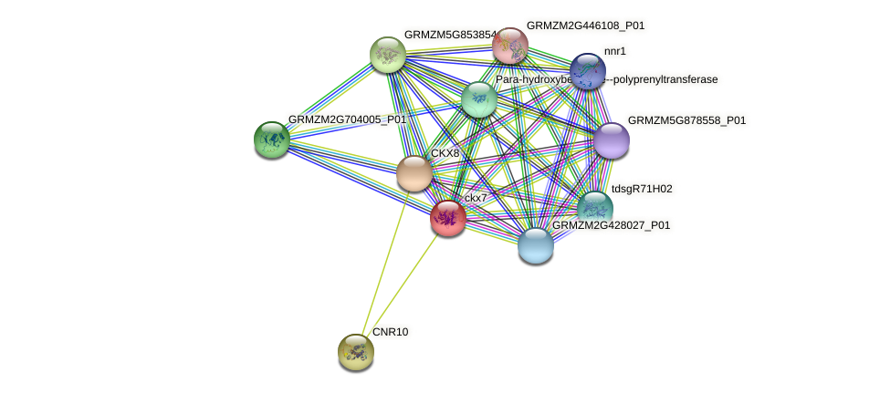 GRMZM2G114427_P01 protein (Zea mays) - STRING interaction network