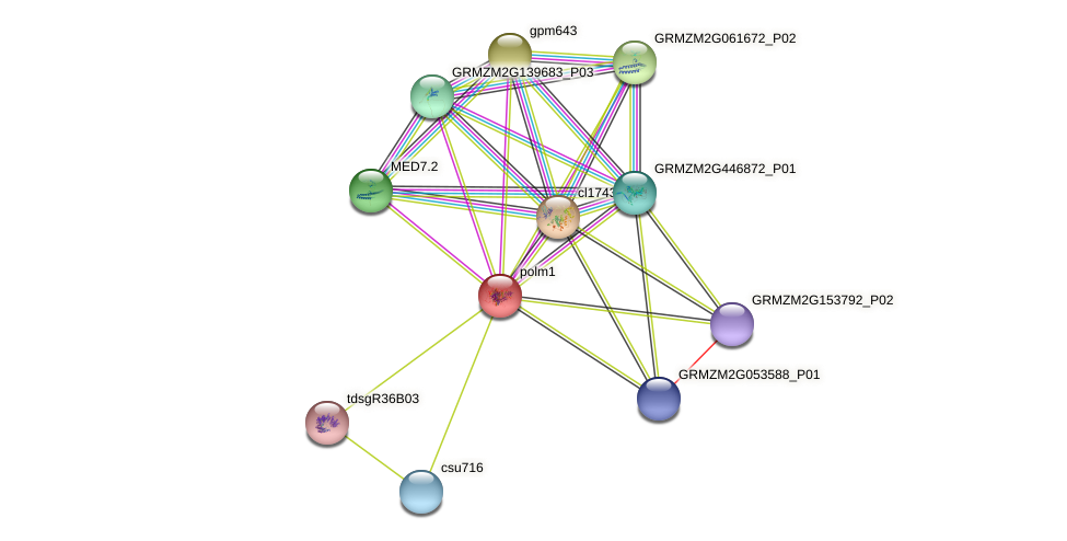 Med12a protein (Zea mays) - STRING interaction network