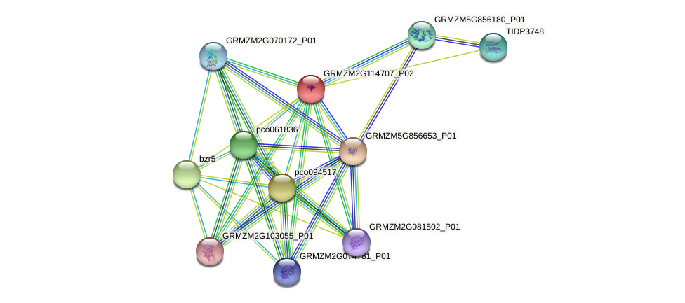 GRMZM2G114707_P02 protein (Zea mays) - STRING interaction network