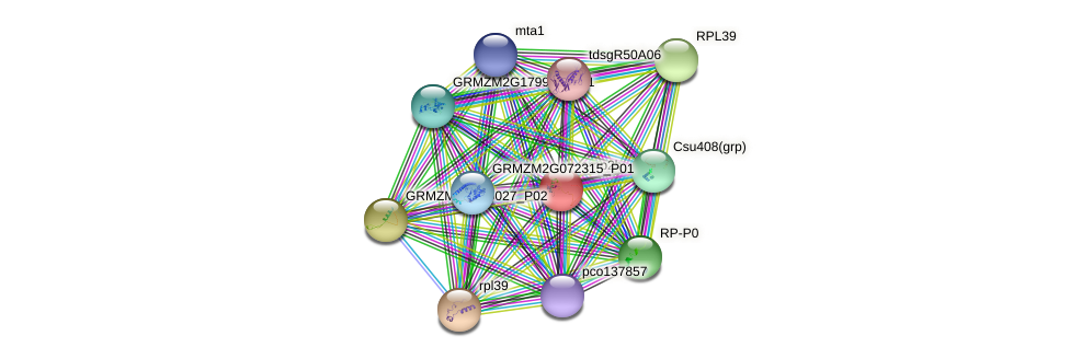 RPP2B protein (Zea mays) - STRING interaction network