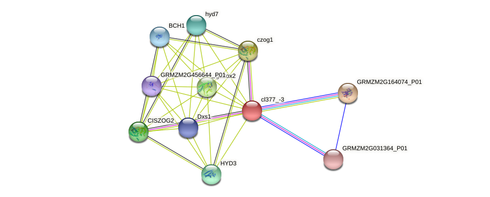cl377_-3 protein (Zea mays) - STRING interaction network