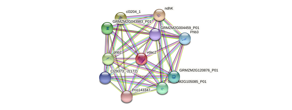 vdac2 protein (Zea mays) - STRING interaction network