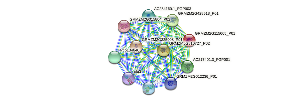 GRMZM2G115065_P01 protein (Zea mays) - STRING interaction network