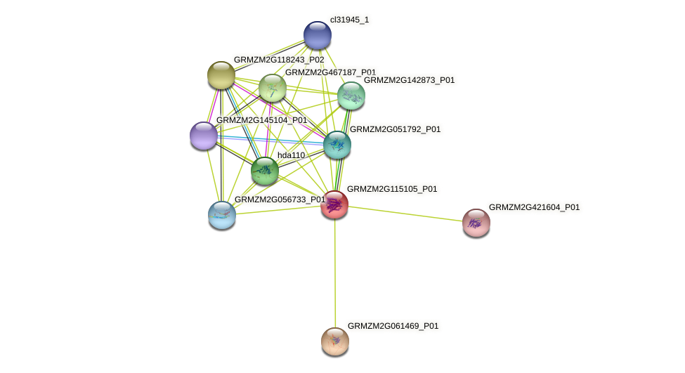 GRMZM2G115105_P01 protein (Zea mays) - STRING interaction network