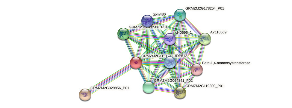 tac905.47 protein (Zea mays) - STRING interaction network