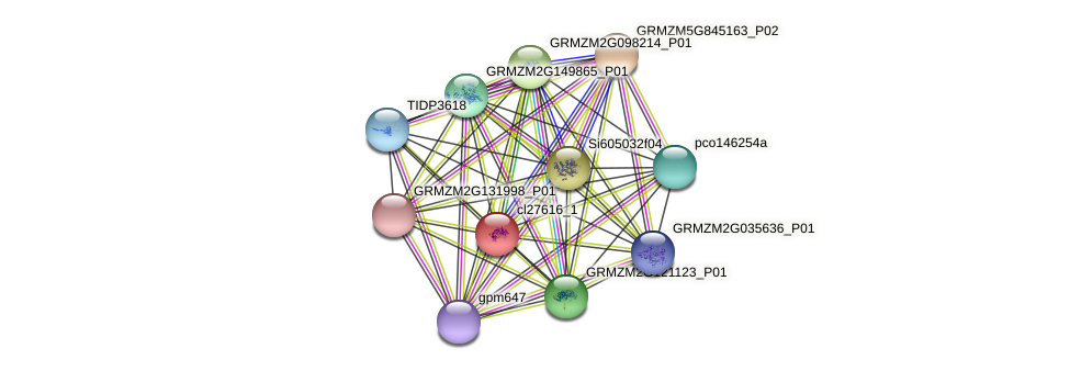 cl27616_1 protein (Zea mays) - STRING interaction network