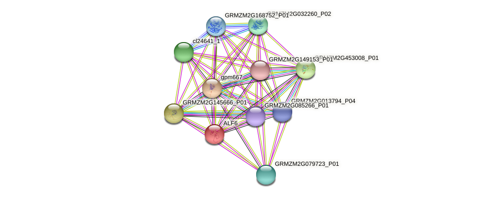 ALF6 protein (Zea mays) - STRING interaction network