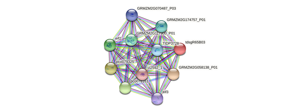 GRMZM2G115598_P01 protein (Zea mays) - STRING interaction network