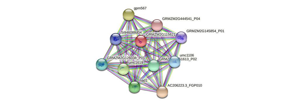 GRMZM2G115621_P03 protein (Zea mays) - STRING interaction network