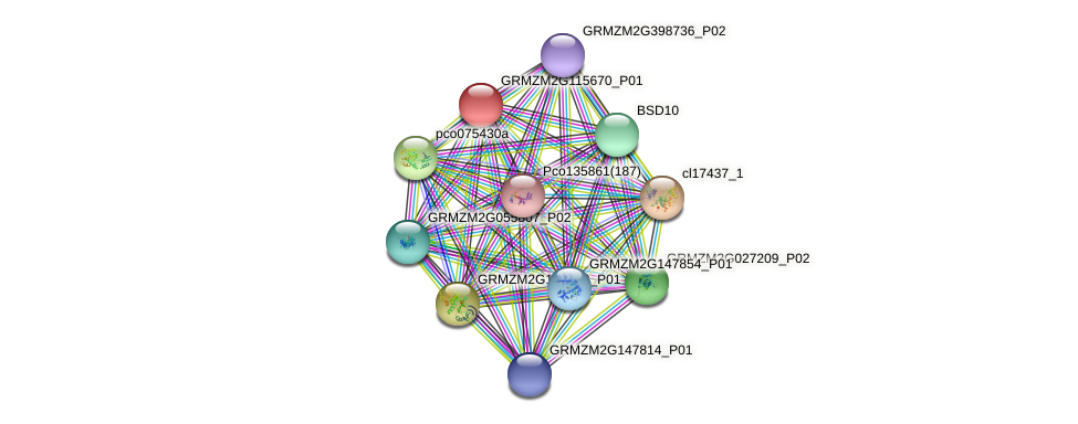 GRMZM2G115670_P01 protein (Zea mays) - STRING interaction network