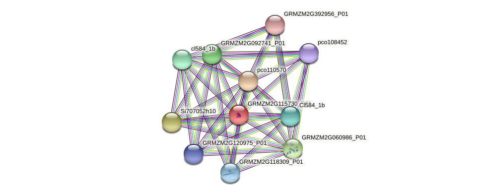 GRMZM2G115730_P01 protein (Zea mays) - STRING interaction network