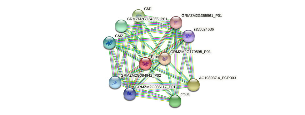GRMZM2G115841_P01 protein (Zea mays) - STRING interaction network