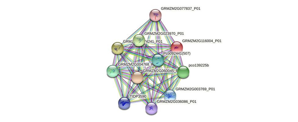 GRMZM2G116004_P01 protein (Zea mays) - STRING interaction network