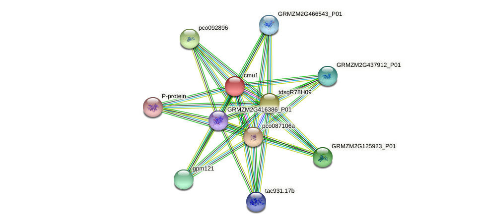 GRMZM2G116087_P01 protein (Zea mays) - STRING interaction network