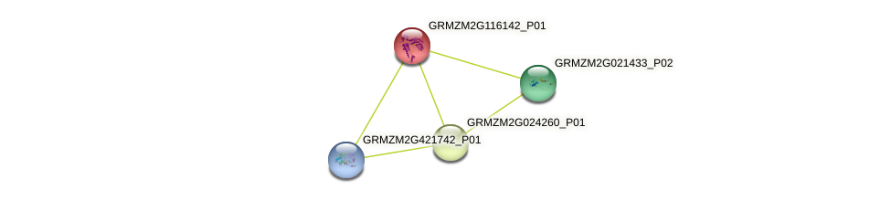 GRMZM2G116142_P01 protein (Zea mays) - STRING interaction network