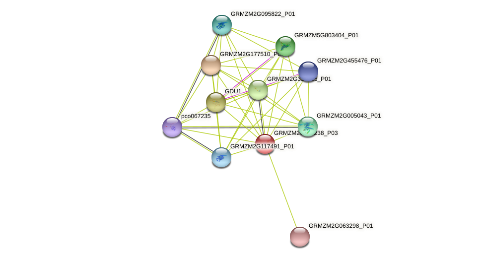 GRMZM2G116238_P03 protein (Zea mays) - STRING interaction network