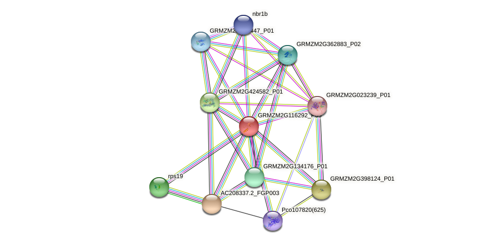 Zm.16530 protein (Zea mays) - STRING interaction network