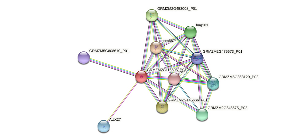 GRMZM2G116506_P01 protein (Zea mays) - STRING interaction network
