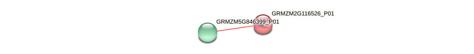 GRMZM2G116526_P01 protein (Zea mays) - STRING interaction network