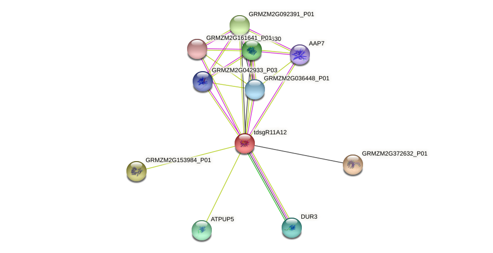 tdsgR11A12 protein (Zea mays) - STRING interaction network
