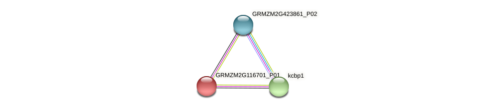 GRMZM2G116701_P01 protein (Zea mays) - STRING interaction network
