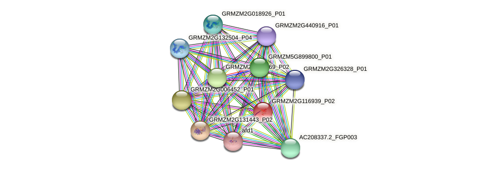 GRMZM2G116939_P02 protein (Zea mays) - STRING interaction network
