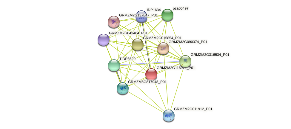 GRMZM2G116971_P01 protein (Zea mays) - STRING interaction network