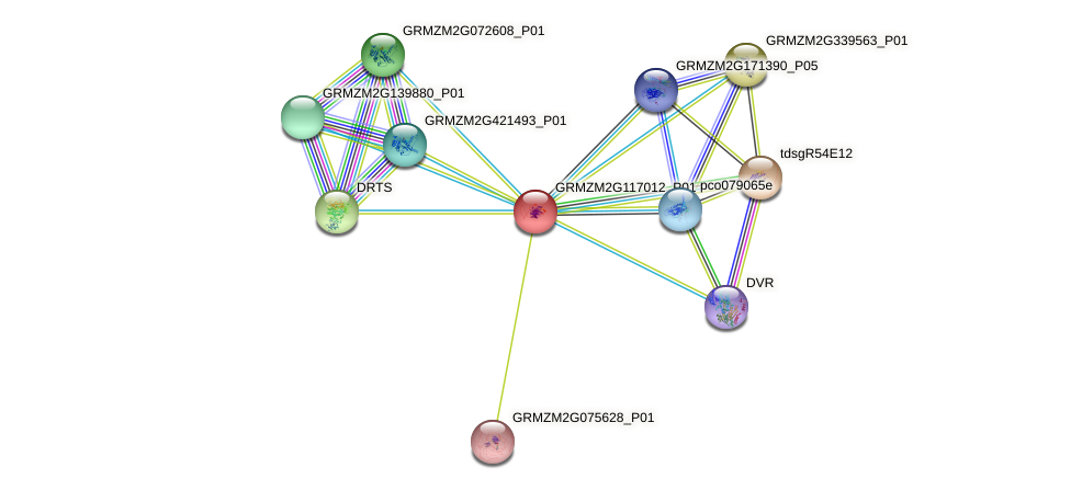GRMZM2G117012_P01 protein (Zea mays) - STRING interaction network