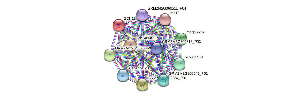 ZCN11 protein (Zea mays) - STRING interaction network