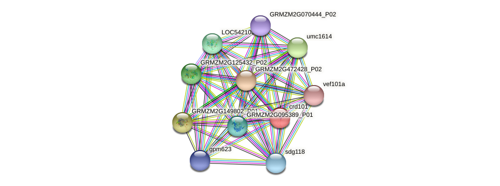 crd101 protein (Zea mays) - STRING interaction network